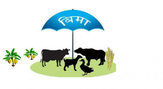 कृषि बीमा निःशुल्क