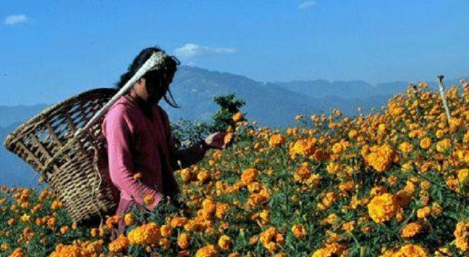लेलेका महिलालाई तिहार खर्च धान्नै मुस्किल